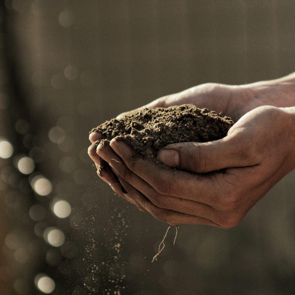 Händer som håller i jord